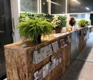 コワーキングスペース(2F)入口付近(植物も多く、緑を身近に感じられる空間 その2)